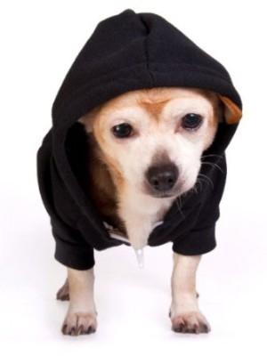 Sweat chien noir